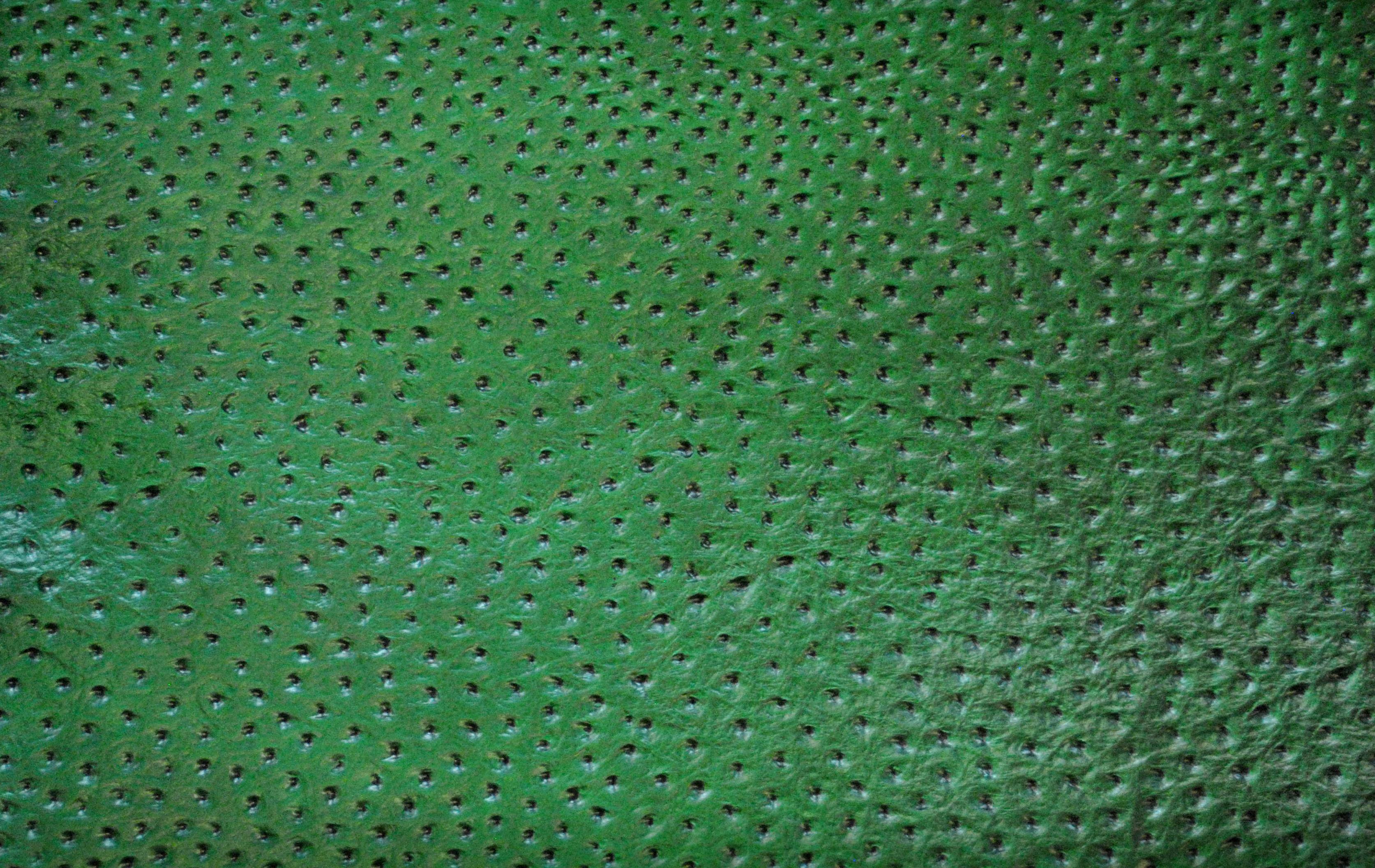 3 Avestruz verde