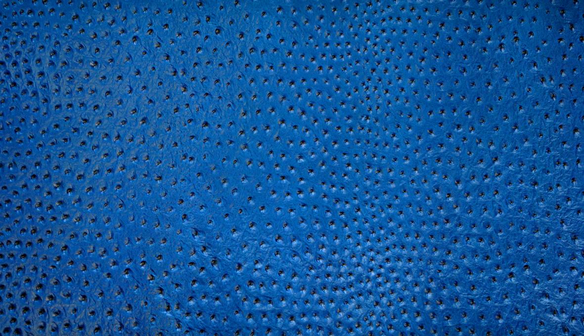 5 Avestruz Azul reducida